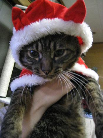 クリスマスーちいた