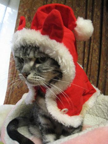 クリスマスーナナ