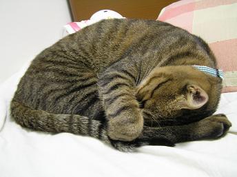 ベッドで寝る猫3