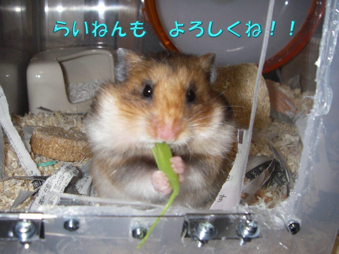 aisatsu_w1100.jpg