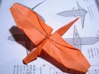 20060409b.jpg