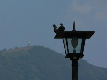 鳩と灰が峰
