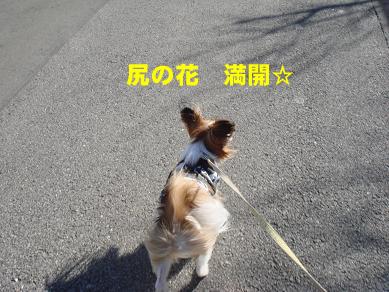 20080124210830.jpg