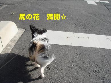 20080124210921.jpg