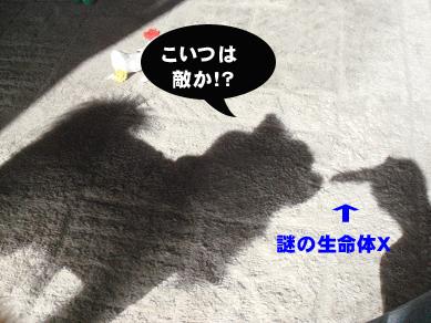 20080204165017.jpg