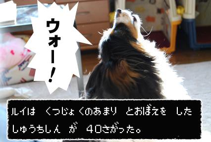 DSC_0304のコピー