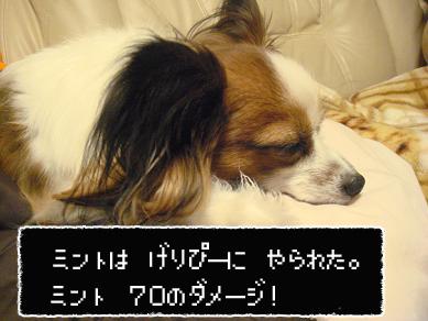 DSC04124のコピー