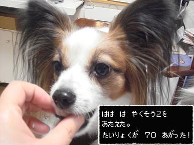DSC04106のコピー