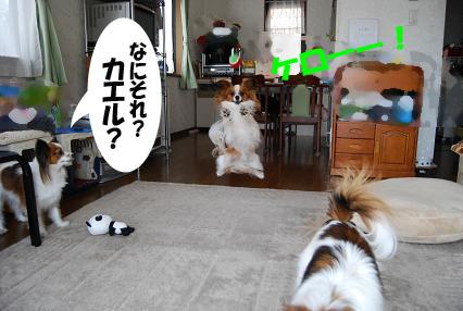 DSC_0371のコピー
