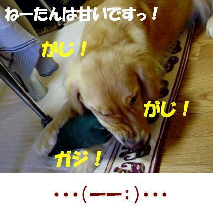 PC130013.jpg