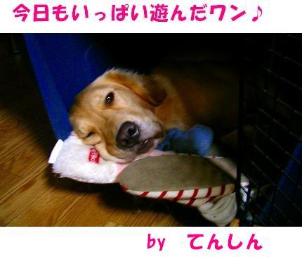 SANY0001_20081027230617.jpg