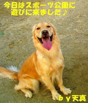 SANY0001_20081204203925.jpg