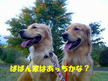 SANY0002_20081023124954.jpg