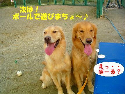 SANY0002_20081204203946.jpg