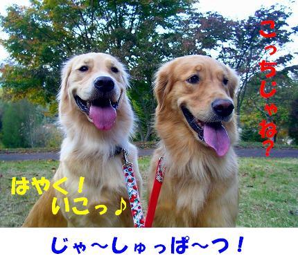 SANY0003_20081023125002.jpg