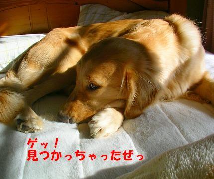 SANY0003_20081128202006.jpg