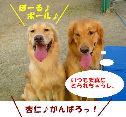 SANY0003_20081204203958.jpg