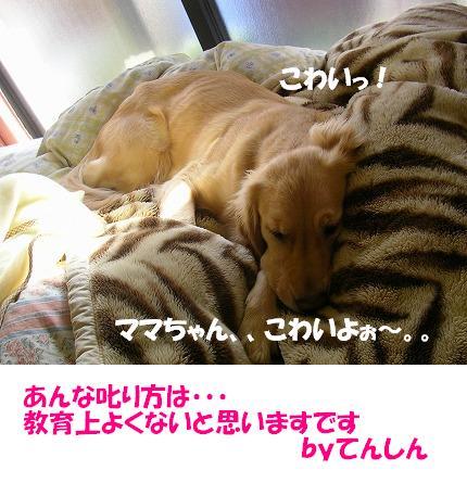 SANY0004_20081212224735.jpg