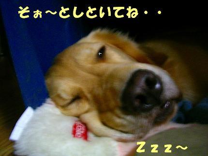 SANY0005_20081027230708.jpg