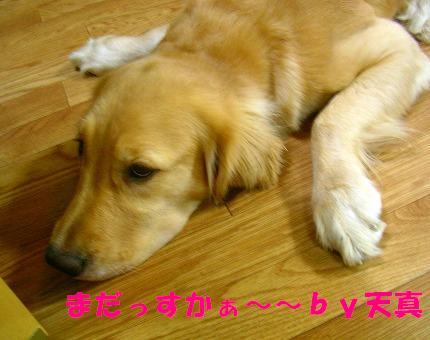 SANY0005_20081103182859.jpg