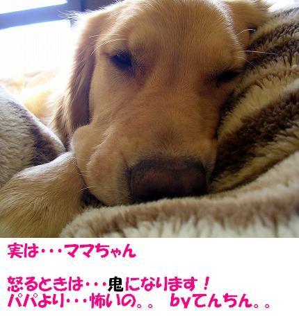 SANY0006_20081212224749.jpg