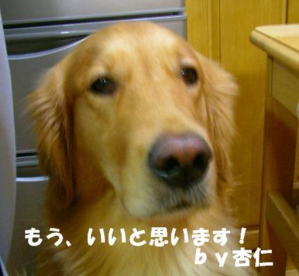 SANY0007_20081103182907.jpg