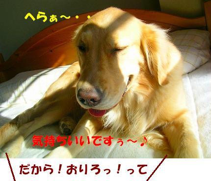 SANY0007_20081128202025.jpg