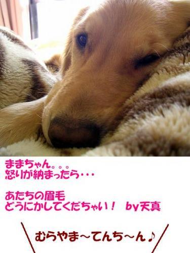 SANY0007_20081212224758.jpg