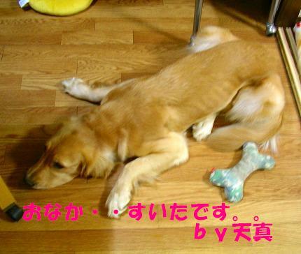 SANY0008_20081103182850.jpg