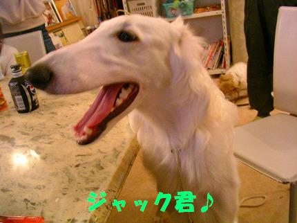 SANY0008_20081115195046.jpg