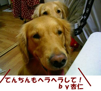 SANY0008_20081125213832.jpg
