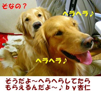 SANY0009_20081125213840.jpg