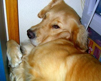 SANY0010_20081112233044.jpg