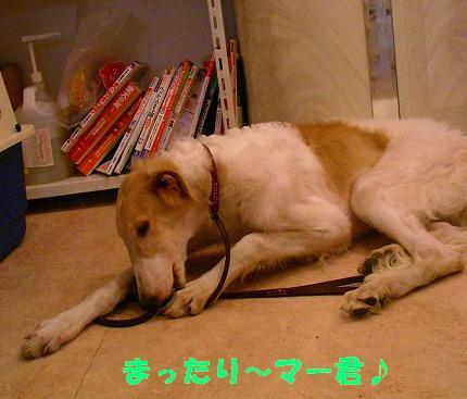 SANY0010_20081115195055.jpg