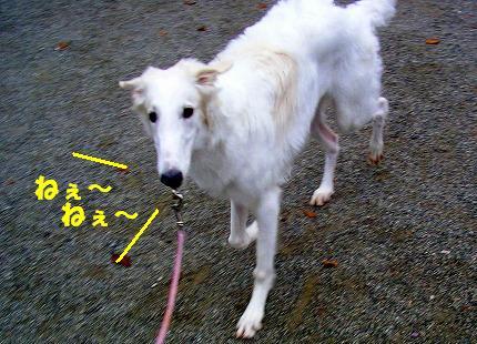SANY0011_20081115195120.jpg