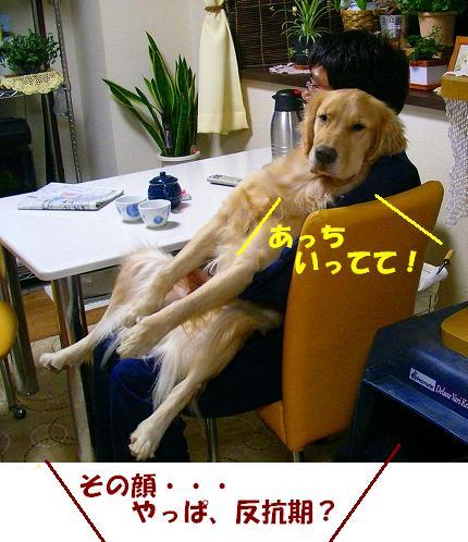 SANY0011_20081128202132.jpg