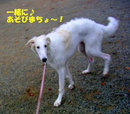SANY0012_20081115195133.jpg