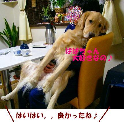 SANY0013_20081128202059.jpg