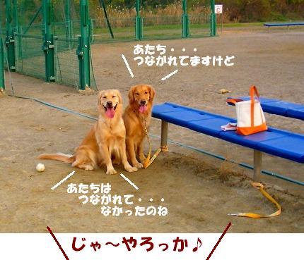 SANY0013_20081204204025.jpg