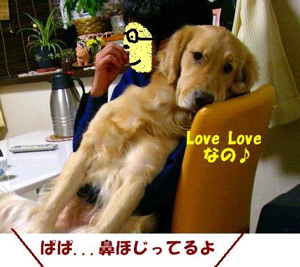 SANY0014_20081128202115.jpg