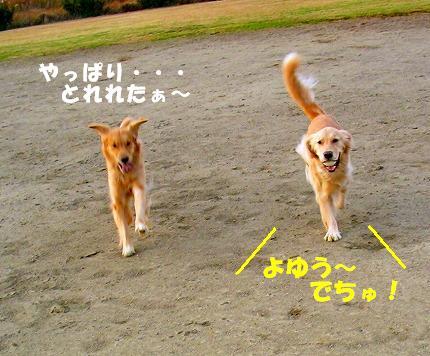SANY0014_20081204204042.jpg