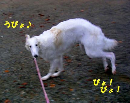 SANY0016_20081115195158.jpg