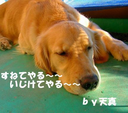 SANY0016_20081115195521.jpg