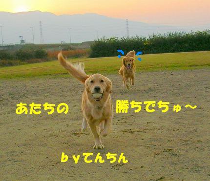 SANY0017_20081204204104.jpg