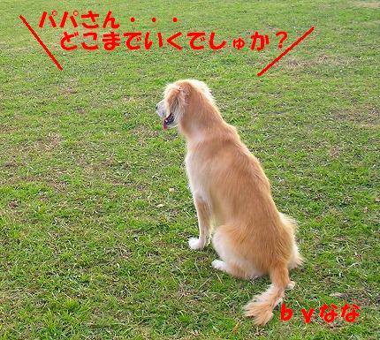 SANY0018_20081130144023.jpg