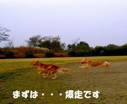 SANY0018_20081204203935.jpg