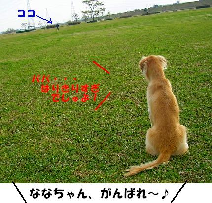 SANY0019_20081130144032.jpg