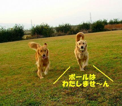 SANY0019_20081204204052.jpg