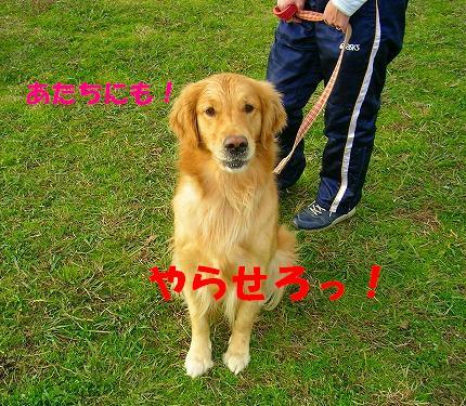 SANY0021_20081130144131.jpg