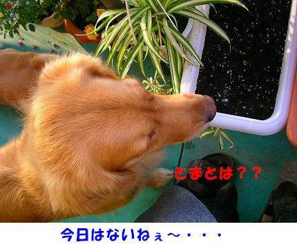 SANY0022_20081015075604.jpg